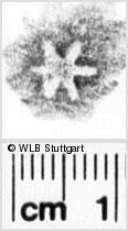 Image Description for https://www.wlb-stuttgart.de/kyriss/images/s0261506.jpg