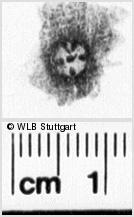 Image Description for https://www.wlb-stuttgart.de/kyriss/images/s0264825.jpg