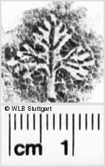 Image Description for https://www.wlb-stuttgart.de/kyriss/images/s0265004.jpg