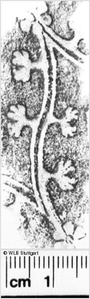 Image Description for https://www.wlb-stuttgart.de/kyriss/images/s0265923.jpg