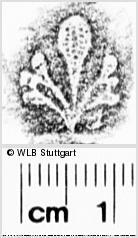 Image Description for https://www.wlb-stuttgart.de/kyriss/images/s0273505.jpg