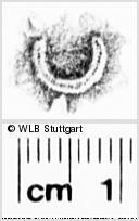 Image Description for https://www.wlb-stuttgart.de/kyriss/images/s0273907.jpg