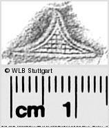 Image Description for https://www.wlb-stuttgart.de/kyriss/images/s0281024.jpg