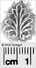 Image Description for https://www.wlb-stuttgart.de/kyriss/images/s0282422.jpg