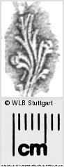 Image Description for https://www.wlb-stuttgart.de/kyriss/images/s0283116.jpg