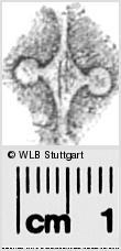 Image Description for https://www.wlb-stuttgart.de/kyriss/images/s0283616.jpg