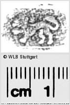 Image Description for https://www.wlb-stuttgart.de/kyriss/images/s0285612.jpg