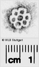 Image Description for https://www.wlb-stuttgart.de/kyriss/images/s0286127.jpg