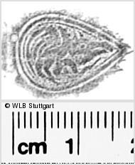 Image Description for https://www.wlb-stuttgart.de/kyriss/images/s0287011.jpg