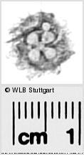 Image Description for https://www.wlb-stuttgart.de/kyriss/images/s0291613.jpg