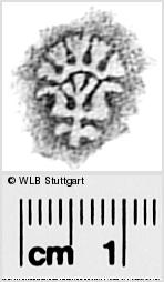 Image Description for https://www.wlb-stuttgart.de/kyriss/images/s0291831.jpg