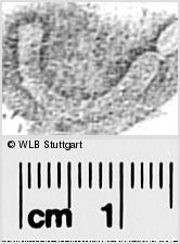 Image Description for https://www.wlb-stuttgart.de/kyriss/images/s0291840.jpg
