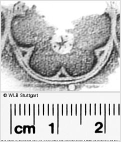 Image Description for https://www.wlb-stuttgart.de/kyriss/images/s0292217.jpg
