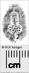 Image Description for https://www.wlb-stuttgart.de/kyriss/images/s0294329.jpg