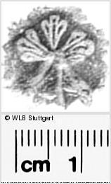 Image Description for https://www.wlb-stuttgart.de/kyriss/images/s0296105.jpg