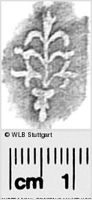 Image Description for https://www.wlb-stuttgart.de/kyriss/images/s0296214.jpg