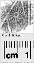 Image Description for https://www.wlb-stuttgart.de/kyriss/images/s0296332.jpg