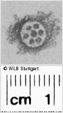 Image Description for https://www.wlb-stuttgart.de/kyriss/images/s0301106.jpg