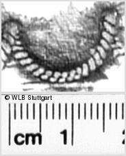 Image Description for https://www.wlb-stuttgart.de/kyriss/images/s0311111.jpg
