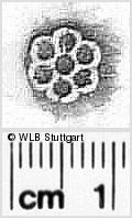 Image Description for https://www.wlb-stuttgart.de/kyriss/images/s0311804.jpg