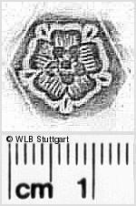 Image Description for https://www.wlb-stuttgart.de/kyriss/images/s0311809.jpg