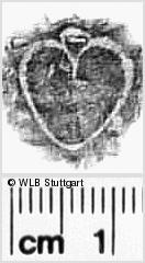 Image Description for https://www.wlb-stuttgart.de/kyriss/images/s0312209.jpg
