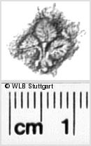 Image Description for https://www.wlb-stuttgart.de/kyriss/images/s0330408.jpg