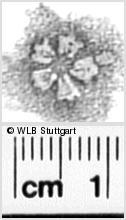 Image Description for https://www.wlb-stuttgart.de/kyriss/images/s0331319.jpg