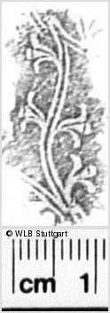 Image Description for https://www.wlb-stuttgart.de/kyriss/images/s0342604.jpg
