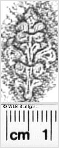 Image Description for https://www.wlb-stuttgart.de/kyriss/images/s0342903.jpg