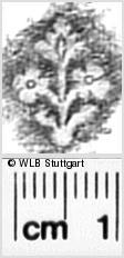Image Description for https://www.wlb-stuttgart.de/kyriss/images/s0343809.jpg