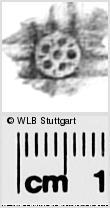 Image Description for https://www.wlb-stuttgart.de/kyriss/images/s2822633.jpg