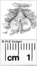 Image Description for https://www.wlb-stuttgart.de/kyriss/images/s3190205.jpg
