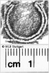 Image Description for https://www.wlb-stuttgart.de/kyriss/images/s3190219.jpg